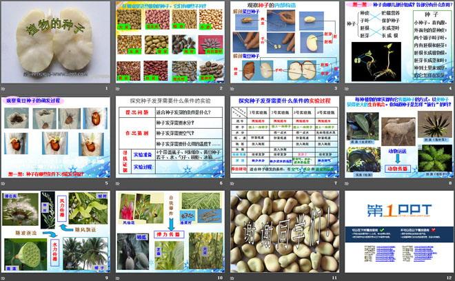 《植物的种子》植物的生长PPT课件