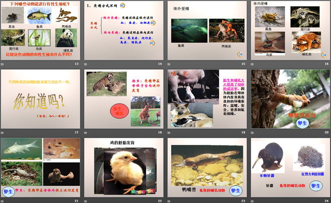 《动物的生长变化》生长与变化ppt课件