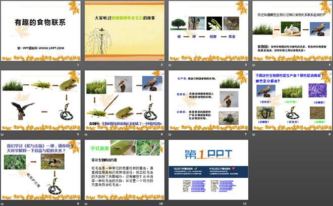 《有趣的食物联系》生物与环境PPT课件4