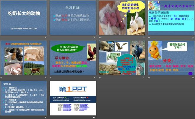 《吃奶长大的动物》多种多样的动物ppt课件2