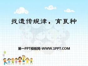 《找遗传规律,育良种》PPT课件