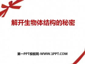 《解开生物体结构的秘密》PPT下载