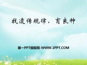 《找遗传规律,育良种》PPT
