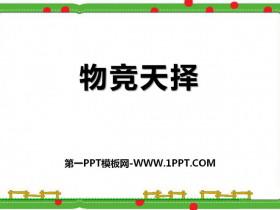 《物竞天择》PPT课件