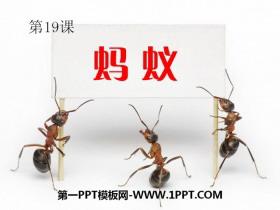 《蚂蚁》PPT课件下载