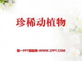 《珍稀动植物》PPT课件