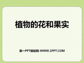 植物的花和果实PPT