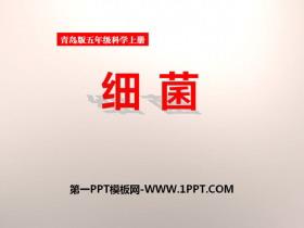 《细菌》PPT课件