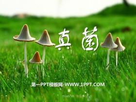 《真菌》PPT