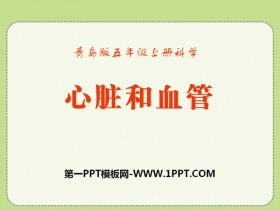《心脏和血管》PPT课件