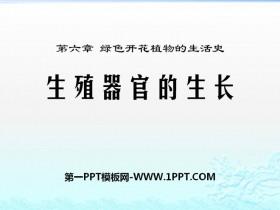 《生殖器官的生长》PPT