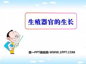 《生殖器官的生长》PPT课件
