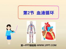 《血液循环》PPT