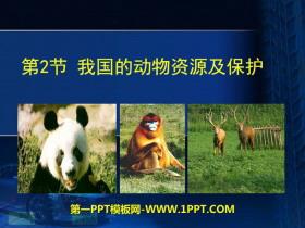 我国的动物资源及保护 PPT课件 -生物圈中的动物PPT