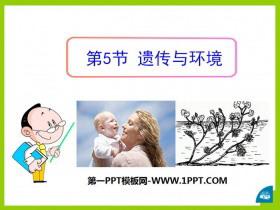 《遗传与环境》PPT