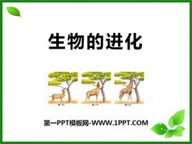 《生物的进化》PPT课件