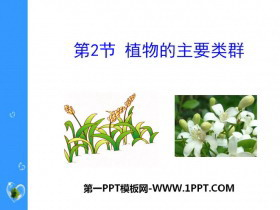 《植物的主要类群》PPT