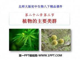 《植物的主要类群》PPT课件下载