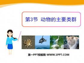 《动物的主要类群》PPT