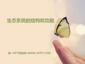 《生态系统的结构和功能》PPT下载