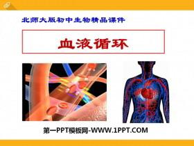 《血液循环》PPT下载