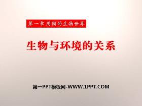《生物与环境的关系》PPT