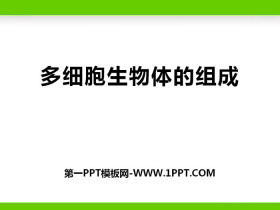 《多细胞生物体的组成》PPT