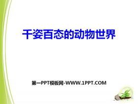 《千姿百态的动物世界》PPT课件