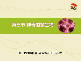 《神奇的微生物》PPT课件