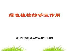 《绿色植物的呼吸作用》PPT