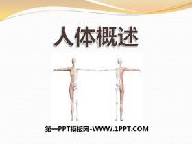 《人体概述》PPT