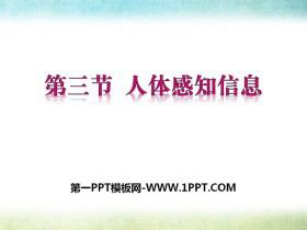 《人体的感知信息》PPT