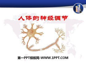 《人体的神经调节》PPT