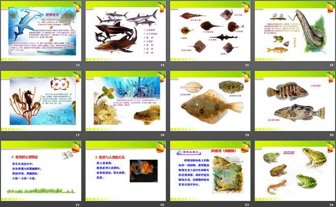 《动物的主要类群》PPT下载 第一部分内容:情景导入 大家认真观察,说出它们是什么动物?它们共同的特征是什么? 学习目标 1.认识脊椎动物主要类群及其进化趋势。 2.掌握鱼类、两栖动物的主要特征,了解它们与人类的关系。 3.通过对不同类群动物与人类的关系的学习,进一步强化热爱动物、保护动物的情感。 .