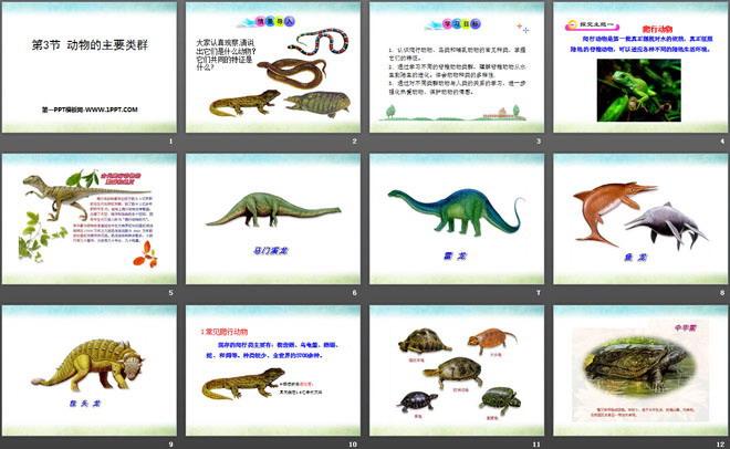 《动物的主要类群》ppt课件下载