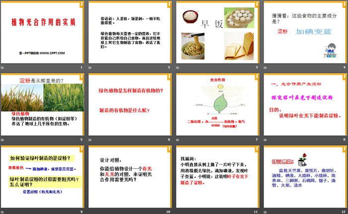 《植物光合作用的实质》PPT课件