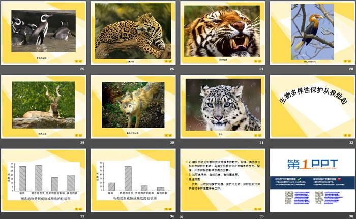 《保护生物多样性的艰巨使命》PPT