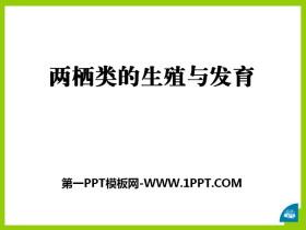 《两栖类的生殖与发育》PPT
