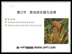 《昆虫的生殖与发育》PPT