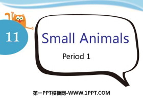 《Small animals》PPT