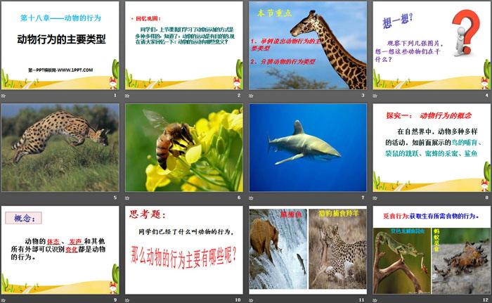 《动物行为的主要类型》平安信誉彩票网