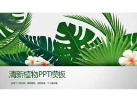 绿色宽叶植物背景PPT模板免费下载