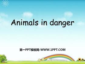 《Animals in danger》PPT
