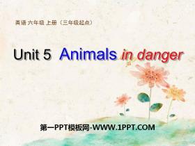 《Animals in danger》PPT课件