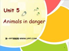 《Animals in danger》PPTtt娱乐官网平台