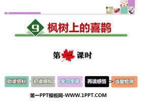 《枫树上的喜鹊》PPT课件(第一课时)