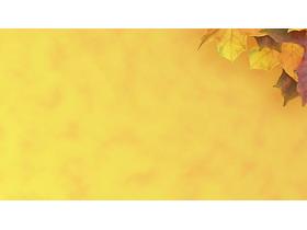 两张唯美枫叶PPT背景图片