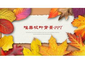 金灿灿的落叶背景PPT中国嘻哈tt娱乐平台