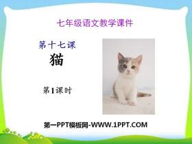 《猫》PPT(第一课时)