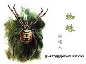 《蜘蛛》PPT